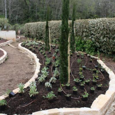 plants,  arrosage